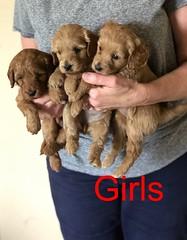 Katie Girls pic 2 8-17