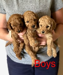 Katie Boys 8-17