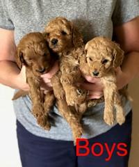 Katie Boys pic 2 8-17