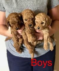 Katie Boys pic 3 8-17