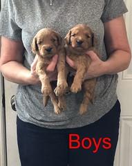 Darby Boys pic 2 8-17