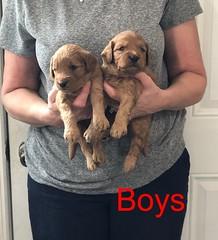 Darby Boys pic 3 8-17