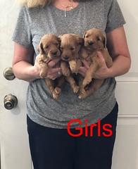 Darby Girls pic 3 8-17