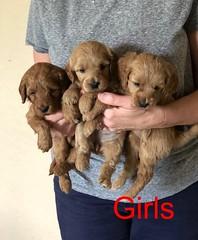 Katie Girls pic 4 8-17