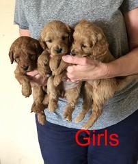 Katie Girls 8-17