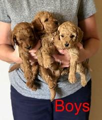 Katie Boys pic 4 8-17
