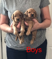 Darby Boys pic 4 8-17