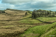 Hadrian's Wall from Housesteads Roman Fort, Northumberland. (Scotland by NJC.) Tags: hill تَلّ colina 小山 brdo kopec bakke forhøjning landskabet heuvel mäki colline hügel λόφοσ collina 丘 언덕 ås wzgórze deal холм backe เขาเตี้ยๆ tepe coğrafya пагорб đồi remote distant isolated inaccessible farflung secluded outoftheway faraway outlying wild unspoiled natural remoto 遥远的 udaljen odlehlý fjern ver kaukainen lointain entfernt απομακρυσμένοσ 遠く離れた 멀리 떨어진 trees foliage vegetation arboretum شَجَرَة árvore 树 drvo strom træ boom árbol puu arbre baum δέντρο albero 나무 hadrianswall housesteadsromanfort northumberland england haydonbridge