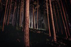 Mystic Forest (M-Z-Photo) Tags: lichtenau bayern deutschland langzeitbelichtung nachtaufnahme wald lichter natur bäume nacht dunkelheit