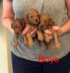 Mazie Boys 8-17