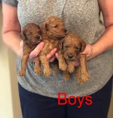 Mazie Boys pic 2 8-17