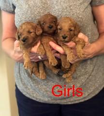 Mazie Girls pic 3 8-17
