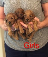 Mazie Girls pic 2 8-17