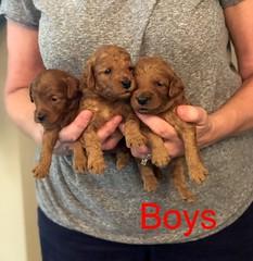 Mazie Boys pic 4 8-17