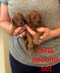Mazie Girls second set pic 3 8-17