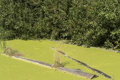 P1130298 (David J. Thomas) Tags: albany oregon talkingwatergardens waterreclamation watertreatment artificialwetland travel vacation family