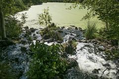 P1130248 (David J. Thomas) Tags: albany oregon talkingwatergardens waterreclamation watertreatment artificialwetland travel vacation family