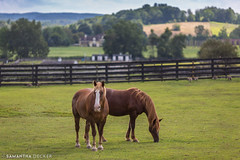 Jeffrey Mac and Connor (Samantha Decker) Tags: equine equineadvocates upstate chatham newyork canonef135mmf2lusm canoneos6d horse samanthadecker ny valatie unitedstatesofamerica