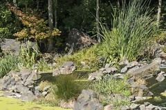 P1130241 (David J. Thomas) Tags: albany oregon talkingwatergardens waterreclamation watertreatment artificialwetland travel vacation family