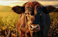 Brown Cow Portrait (scilit) Tags: cow brown portrait farm field sunlight shadows animal sky grass flowers nature landscape