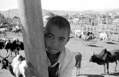 Au marché aux zébus d'Ambalavao, Madagascar (Roland de Gouvenain) Tags: zebu market ambalavao madagascar boy portrait garçon stockade taureaux marché