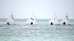 Aruba_International_Regatta_2019_049 (eric15) Tags: aruba international regatta sail sailing oranjestad surfside marina dutch marines sunfish beach cat cats optimist qube f11