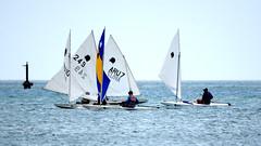 Aruba_International_Regatta_2019_029 (eric15) Tags: aruba international regatta sail sailing oranjestad surfside marina dutch marines sunfish beach cat cats optimist qube f11