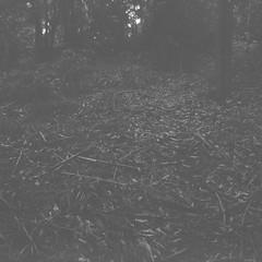 The ground (Matthew Paul Argall) Tags: 120film 120 mediumformat squareformat squarephoto ilforddelta100 100isofilm blackandwhite blackandwhitefilm