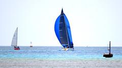 Aruba_International_Regatta_2019_042 (eric15) Tags: aruba international regatta sail sailing oranjestad surfside marina dutch marines sunfish beach cat cats optimist qube f11