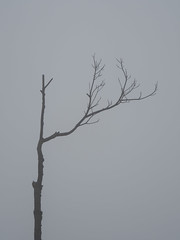 Soledad (grw59) Tags: hong kong victoria peak fog