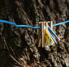 plastic and wood (f8shutterbug) Tags: idb clothespegs wire plastic wood tree texture complementarycolours yellowandblue metal