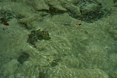 Il Chiarzò (paolo-p) Tags: palcoda acqua water tramontidisotto