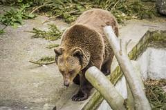 CK Castle Bear (BisonAlex) Tags: ceskykrumlov czche克倫洛夫 ck小鎮 捷克 europe 歐洲 sony a73 a7iii a7m3 a7 taiwan 台灣 外拍 旅拍 travel 街拍 street streetphoto streetshot
