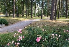 """""""One Quiet Morning in August"""" (Seppo53) Tags: park morning flowers summer tree grass path walkway finland helsinki suburb empty serene"""