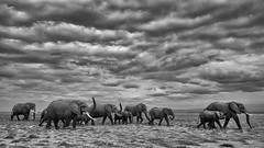 Elephant Family (Leon Sammartino) Tags: amboseli sky nd filter kenya national park east africa safari fine art wildlife elephant family herd fujifilm xmount xc lens travel wild