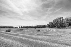 Harvest (enneafive) Tags: jesseren sintannavallei cornfield straw trees wood field bucolic pastoral agriculture fujifilm xt2 affinityphoto monochrome sky clouds