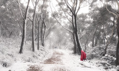 Hungry Like The Wolf (Emerald Imaging Photography) Tags: katoomba narrowneck snow tree trees littleredridinghood wolf sydney newsouthwales nsw australia australian australianlandscape australianbush fairytale