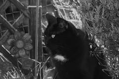Flöckschen (samgi2) Tags: cats haustier tier indoor pets cat kitty kitten pet animal cute gato feline canon nrw germany katzen katze black welpen baby natur tabby kuschelig beautiful sony