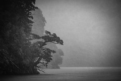 """New Zealand - Milford Sound (Ineound) Tags: neuseeland newzealand spiegel spiegelblick xpro2 blick spiegelblickde fujinon xf 3548 55200 mm r lm ois f3548 55200mm tele fuji 50200mmf3548 fujifilm xpro rangefinder erf """"spiegelblickde"""" bw monochrome sw blackwhite schwarzweiss landscape landschaft natur nature"""