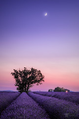 Purple Dreams (Bilderschmied-Danz) Tags: france frankreich provence valensole bluehour blauestunde nacht night lavender lavendel tree baum moon mond haus house hütte hut purple lila bilderschmied