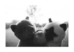 Uncertain Friends and a Master (xockisfriends) Tags: animal cats bonnie bonaparte wootanhippovanrheen wooti wolfiwolf london travels friends master masteroftheartoffinepooping ischweissönischtö mhhm grafblauauge siebenbürgen persien pari ausgesetzt immerschlechtbeandelt wahnsinn cute goldig unermesslich underexposed monochrome trio jazzinbaggies butlers freundefürsleben bri