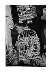The Gilded Cage (radspix) Tags: nikon f801 2880mm nikkor f3556d arista edu ultra 100 pmkpyro