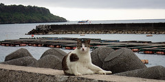cat 107 (8pl) Tags: chat mer côte motobu okinawa japon eau mur portraitdechat jetée relief