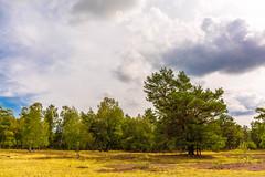 Einsame Heide (Darklight-Photo) Tags: wald bäume colorkey natur lüneburgerheide outdoor
