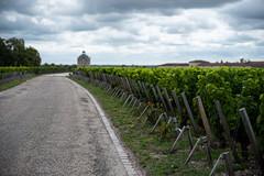 Château Latour (ZeGaby) Tags: pentaxk1 pentax2470mm landscapes naturephotography paysage bordeaux châteaulatour vine vineyard vignobles vignes