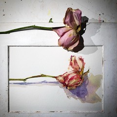 Day 1471. The #rose #painting for today. #watercolour #watercolourakolamble #sketching #stilllife #flower #art #fabrianoartistico #hotpress #paper #dailyproject (akolamble) Tags: rose painting watercolour watercolourakolamble sketching stilllife flower art fabrianoartistico hotpress paper dailyproject