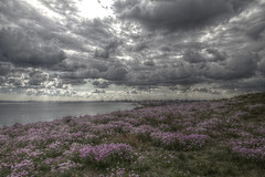 Hengitsbury Head (The Happy Snapping Dog Walker) Tags: canon80d canoneos efs1585 hdr luminance hengitsburyhead coast dorset sea clouds sky flowers southwest nature
