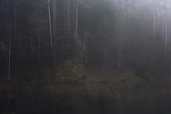 "from the series ""a mirror of ancient calm"" (Mindaugas Buivydas) Tags: lietuva lithuania color autumn fall mist fog november amirrorofancientcalm verkiaiforest miškas verkiųmiškas verkiairegionalpark verkiųregioninisparkas mindaugasbuivydas tree trees yellow softgreen"