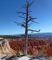 Bryce Canyon Parc national (en2016) (9) (Pierre Andre Leclercq) Tags: brycecanyon utah etatsunis parcnationalaméricain