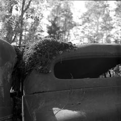carcemetery023 (salparadise666) Tags: cemetery ryd sweden car nils volkmer rolleiflex sl66 planar 80mm fomapan caffenol wreck rust nature contrast detail bw black white monochrome 6x6 medium format analogue film slr camera